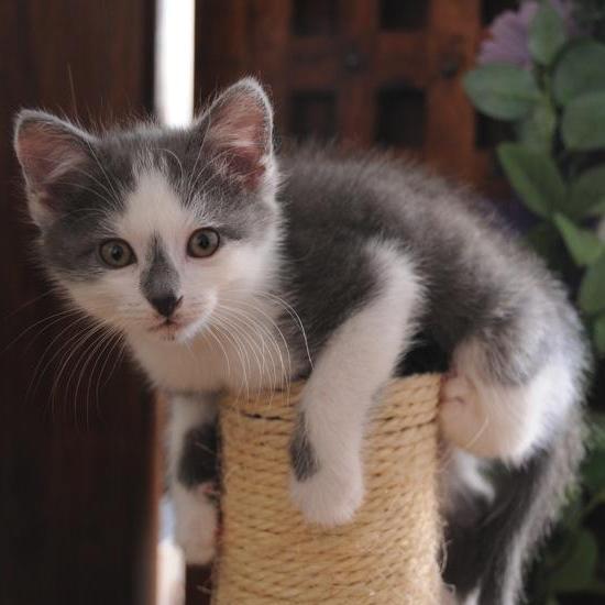 Le chaton est joueur et très dynamique