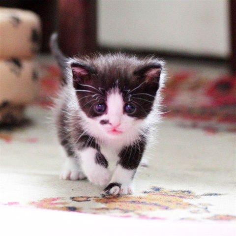 L'adoption du chaton