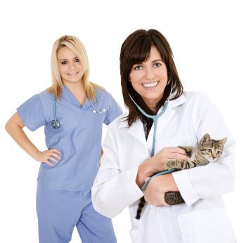 Lire la suite: Accueillir un chaton : les soins