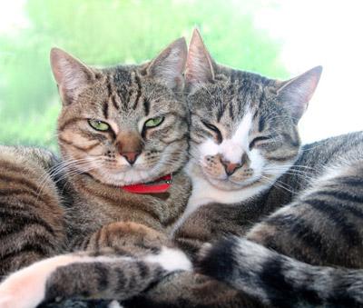les chats et les chattes n'ont pas vraiment de différence de caractère