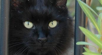 Lire la suite: Le FIV du chat