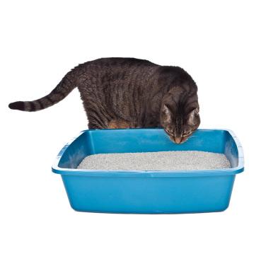 Lire la suite: Les calculs urinaires chez le chat