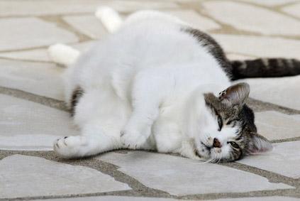 Controlez régulièrement le poids de votre chat