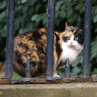 Lire la suite: La stérilisation de la chatte