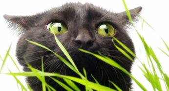 Les vers du chat