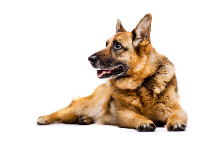 Les minéraux sont importants dans la ration quotidienne de votre chien