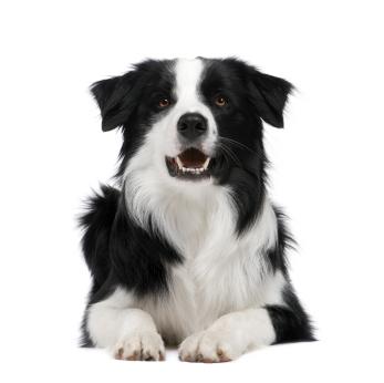 Lire la suite: La spirocercose chez le chien