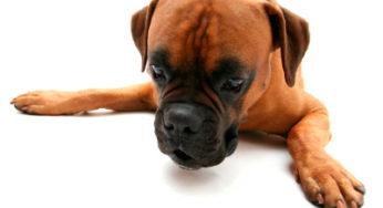 La réprimande non justifiée peut entraîner des troubles du comportement