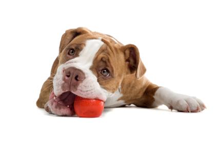 Le chien adore jouer