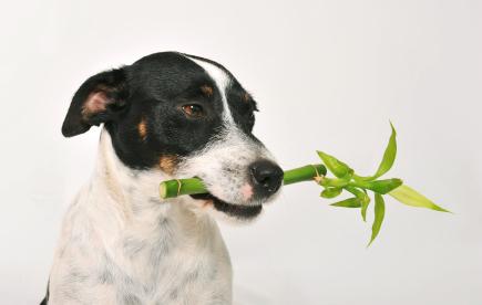 Si votre chien mange des plantes c'est qu'il a peut être besoin de se purger