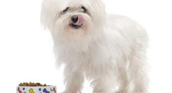 Les croquettes : la meilleure alimentation pour votre chien