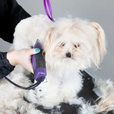 le toilettage du chien entretien peau et poils du chien soin chiens. Black Bedroom Furniture Sets. Home Design Ideas