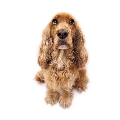 Même si cela est difficile, ne chouchoutez pas trop votre chien