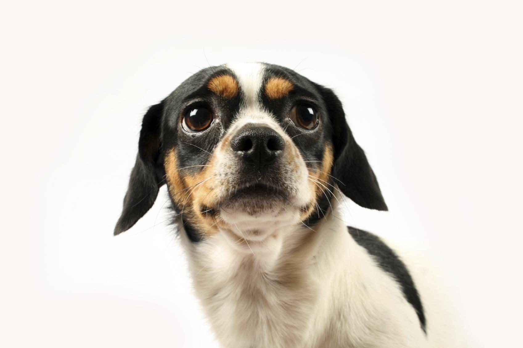 Lire la suite: Entretien des yeux du chien
