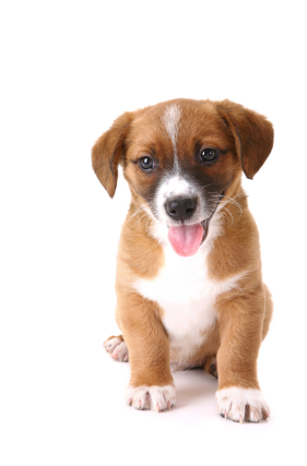 Alimentation du chiot alimentation - Chiot a colorier ...