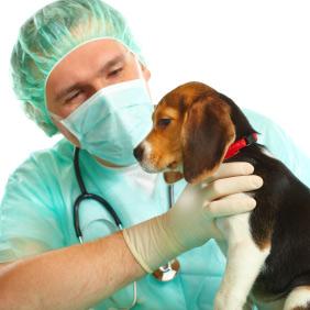 Les gales du corps chez le chien - Parasites et maladies ...
