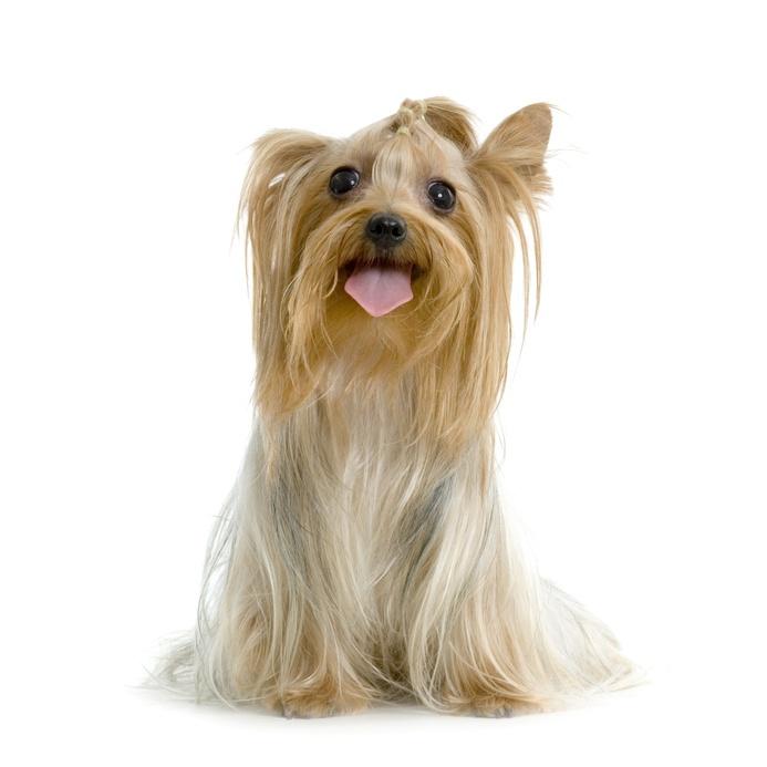 Alimentation du jeune chien de petite et moyenne race - Couper les griffes d un chiot ...