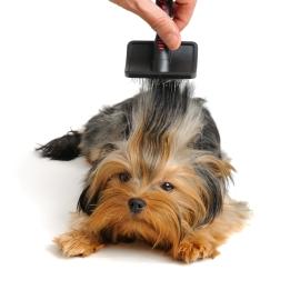 Le pelage est le reflet de l'état de santé de votre chien