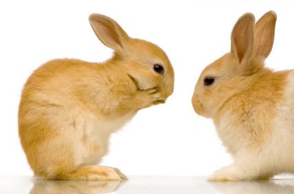Lire la suite: La reproduction chez le lapin