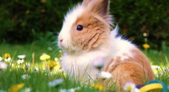 Lire la suite: Les lapins et rongeurs et la canicule