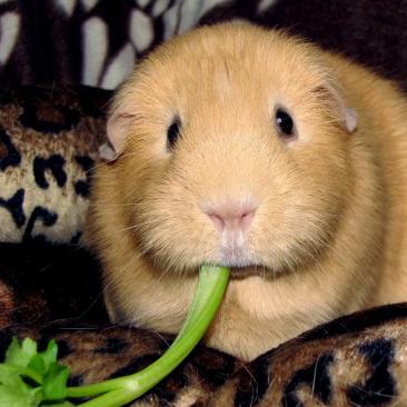 Lire la suite: L'apport de fibres dans l'alimentation des rongeurs et lapins