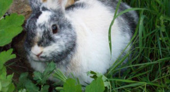 Lire la suite: Les besoins nutritionnels du lapin
