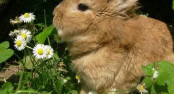 Lire la suite: Alimentation du lapin en pratique