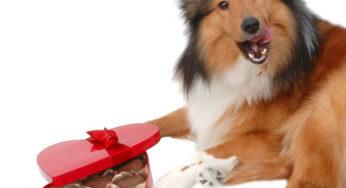 le chien et le chocolat