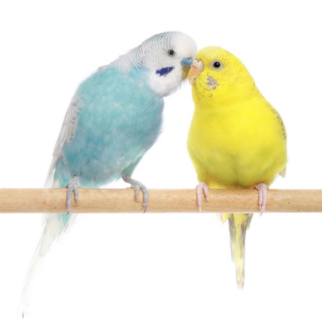Comment choisir un oiseau comment choisir un oiseau accueillir un oiseau oiseaux - Comment effrayer les oiseaux ...