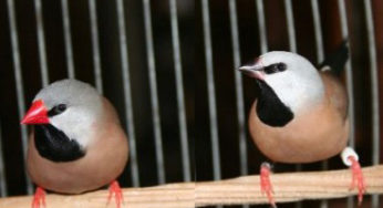 Lire la suite: Les oiseaux exotiques