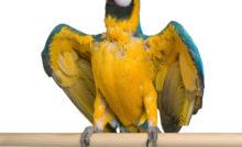 Lire la suite: La mue physiologique chez les oiseaux