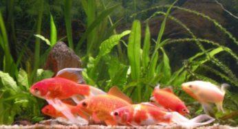 Lire la suite: L'aquarium idéal