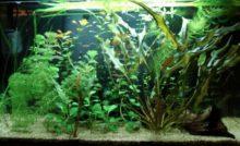 Lire la suite: Installation de votre aquarium