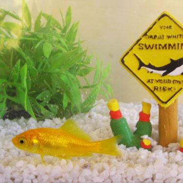 Bien nourrir vos poissons rouges bien nourrir ses for Aquarium poisson rouge sans pompe