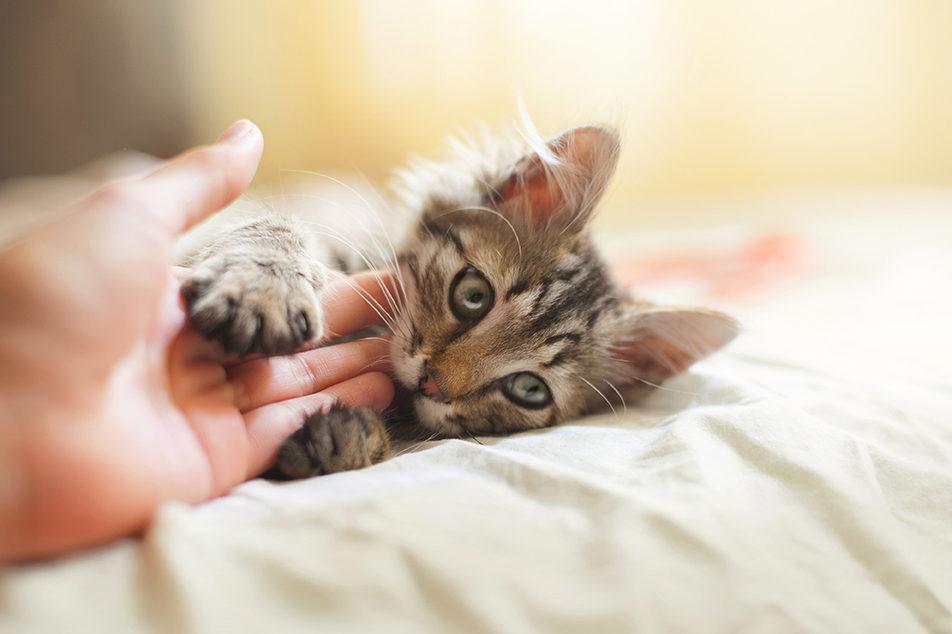 chat qui parle rencontre chaton)