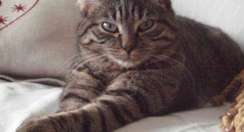Lire la suite: Faut-il vacciner un chat qui ne sort pas ?