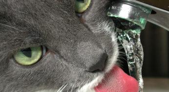 Lire la suite: L'insuffisance rénale chez le chat