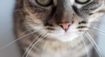 Les chats cimmuniquent entre eux pour marquer leur territoire