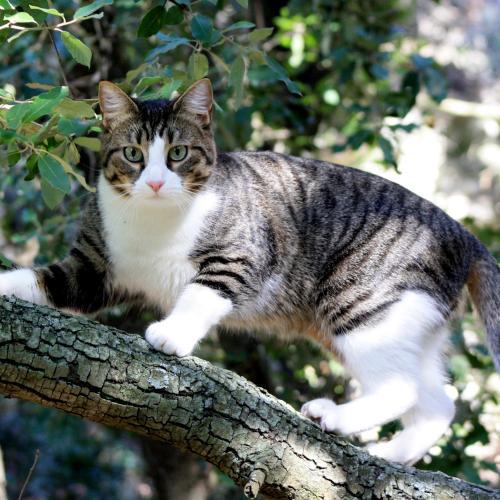 Le chat fugueur - WanimoVéto