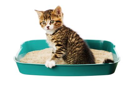 Les chats sont très sensibles aux odeurs et aux souillures