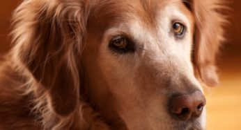 Lire la suite : Le chien senior : implications