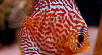 Lire la suite: Les poux des poissons
