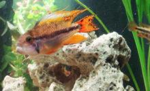 Lire la suite: Contrôler les agents chimiques dans votre aquarium