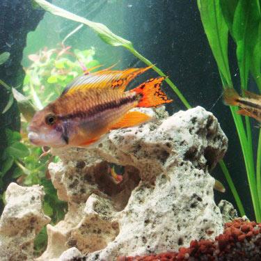 Ph aquarium poisson ph comment le modifier aquagenome for Kit poisson rouge