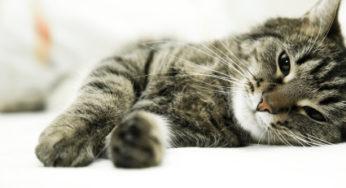 Lire la suite: Le chat senior : implications sur la santé