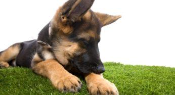 Lire la suite: Le stress du chien