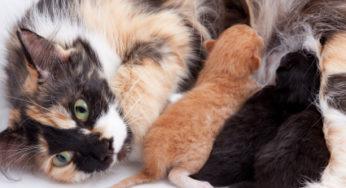 La chatte est ses chatons