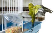 Choississez l'emplacement de la cage pour votre oiseau