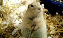 Lire la suite: Les besoins nutritionnels du chien de prairie