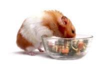 Lire la suite: Les besoins nutritionnels du hamster